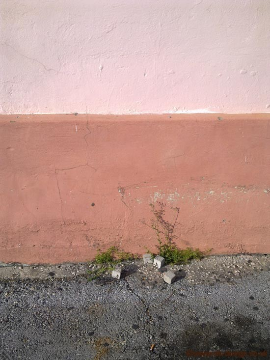 Pink grocery store wall in Barbados. Photo by Colette van den Thillart